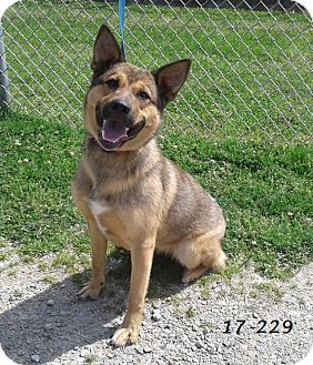German Shepherd Dog Mix Dog for adoption in Cannelton, Indiana - Ember