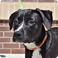 Adopt A Pet :: The Walking Dead: Daryl - Charlotte, NC