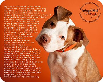 American Staffordshire Terrier/American Pit Bull Terrier Mix Dog for adoption in Medina, Ohio - Dawson