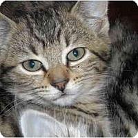 Adopt A Pet :: Brie - Riverside, RI