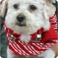 Adopt A Pet :: Chai - Oceanside, CA