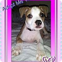 Adopt A Pet :: Adrian - Lakeland, FL