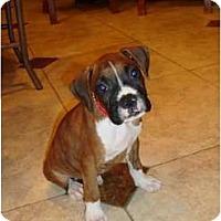 Adopt A Pet :: Paris - Lake Forest, CA