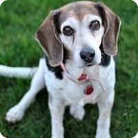 Adopt A Pet :: Dakota Rue - Phoenix, AZ