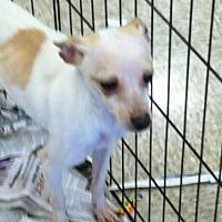Adopt A Pet :: Toby - Fresno, CA