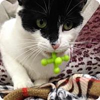 Adopt A Pet :: Taylor - Byron Center, MI
