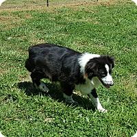 Adopt A Pet :: Prospera - Lexington, KY