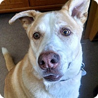 Adopt A Pet :: Beckett, in ME, Foster Needed - kennebunkport, ME