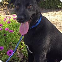 Adopt A Pet :: JONES - pasadena, CA