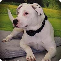 Adopt A Pet :: DD - Santa Fe, TX
