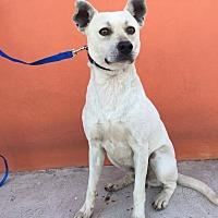 Adopt A Pet :: Lukas - San Diego, CA