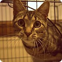 Adopt A Pet :: Elsie - Lancaster, PA