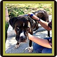 Adopt A Pet :: Mathilda - Murrieta, CA