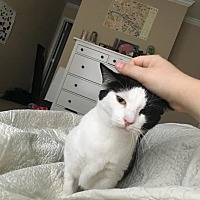 Adopt A Pet :: Paige - Athens, GA