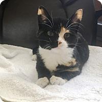 Adopt A Pet :: Elsa - Staten Island, NY