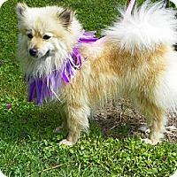 Adopt A Pet :: ELISE - Hesperus, CO