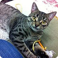 Adopt A Pet :: Jingles - Warminster, PA