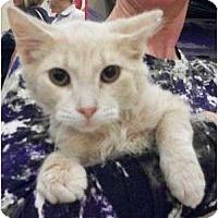Adopt A Pet :: Fritz - Reston, VA