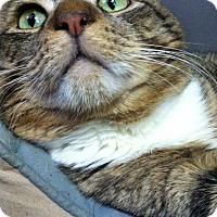 Adopt A Pet :: Oliver - Trevose, PA