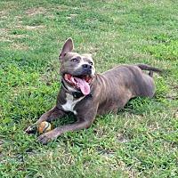 Adopt A Pet :: Charlotte - Toms River, NJ