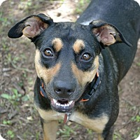 Adopt A Pet :: Sadie - oklahoma city, OK