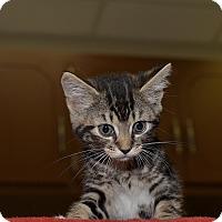 Adopt A Pet :: Betty Jo - Medina, OH