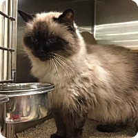 Adopt A Pet :: Priscilla - Colmar, PA