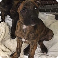 Adopt A Pet :: Charna - Washington, PA