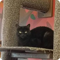 Adopt A Pet :: Luna - Whitewater, WI
