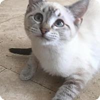 Adopt A Pet :: Onyx - Dallas, TX