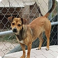 Adopt A Pet :: Addy - Denver, CO