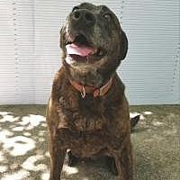 Adopt A Pet :: Lady - Winnsboro, SC
