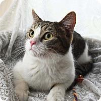 Adopt A Pet :: Nicky - Bristol, CT