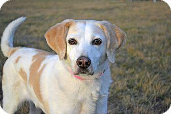 Pointer Mix Dog for adoption in Cheyenne, Wyoming - Zoe