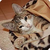 Adopt A Pet :: Money (LE) - Little Falls, NJ