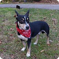 Adopt A Pet :: Korbin - Mocksville, NC