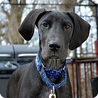 Adopt A Pet :: Molly - Caledon, ON