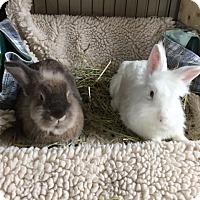 Adopt A Pet :: Sugar and Spice - Moneta, VA