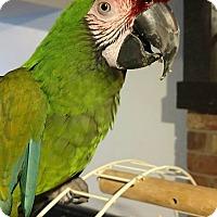 Adopt A Pet :: Gemma - Lenexa, KS