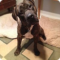 Adopt A Pet :: Hooch - Austin, TX