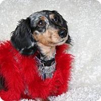 Adopt A Pet :: Zeta - Sioux Falls, SD