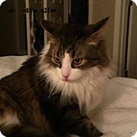 Adopt A Pet :: Nick - Lexington, KY