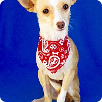 Adopt A Pet :: Kidd - Irvine, CA