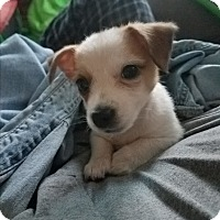 Adopt A Pet :: Mia - Kemp, TX