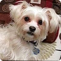 Adopt A Pet :: Suzie - Toronto, ON
