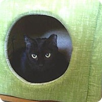 Adopt A Pet :: Licorice - Portland, ME
