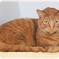 Adopt A Pet :: Lindy - Howell, MI