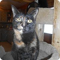 Adopt A Pet :: Mrs. Cunnigham - Richland, MI