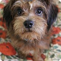 Adopt A Pet :: Rosco - Yuba City, CA