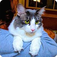 Adopt A Pet :: Phoebe - Davis, CA